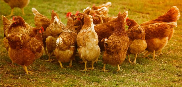 First farm animal practice achieves iiE accreditation Case Study